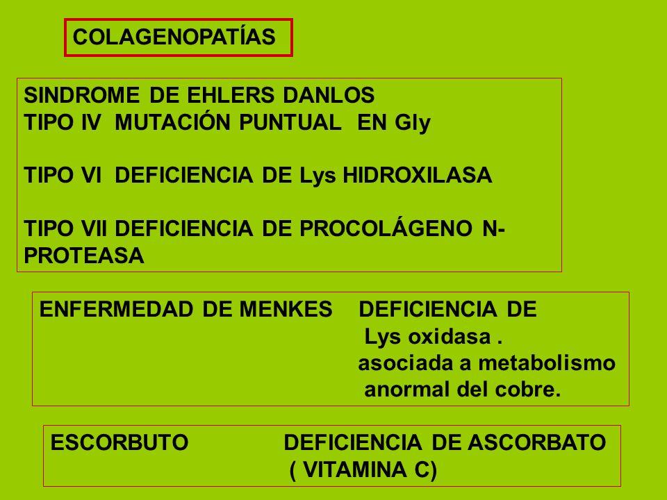 COLAGENOPATÍASSINDROME DE EHLERS DANLOS. TIPO IV MUTACIÓN PUNTUAL EN Gly. TIPO VI DEFICIENCIA DE Lys HIDROXILASA.