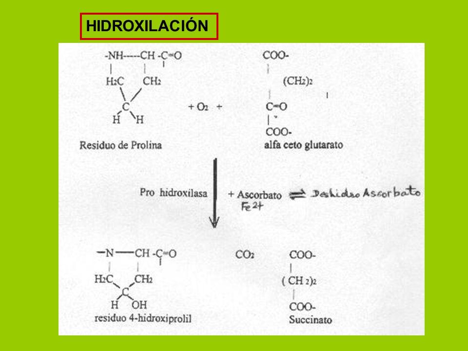 HIDROXILACIÓN