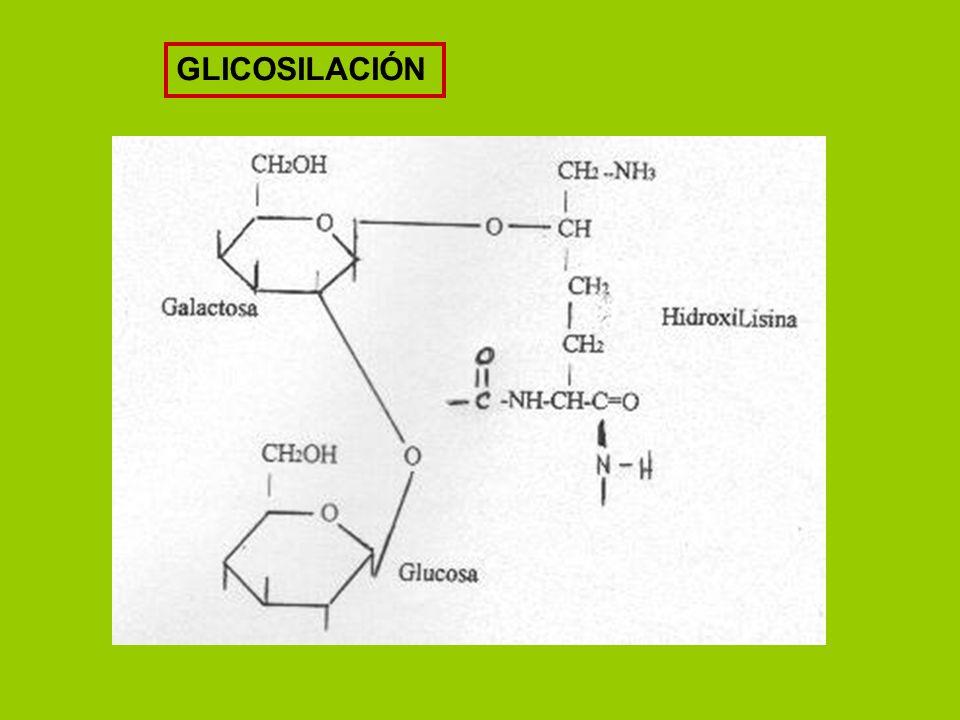 GLICOSILACIÓN