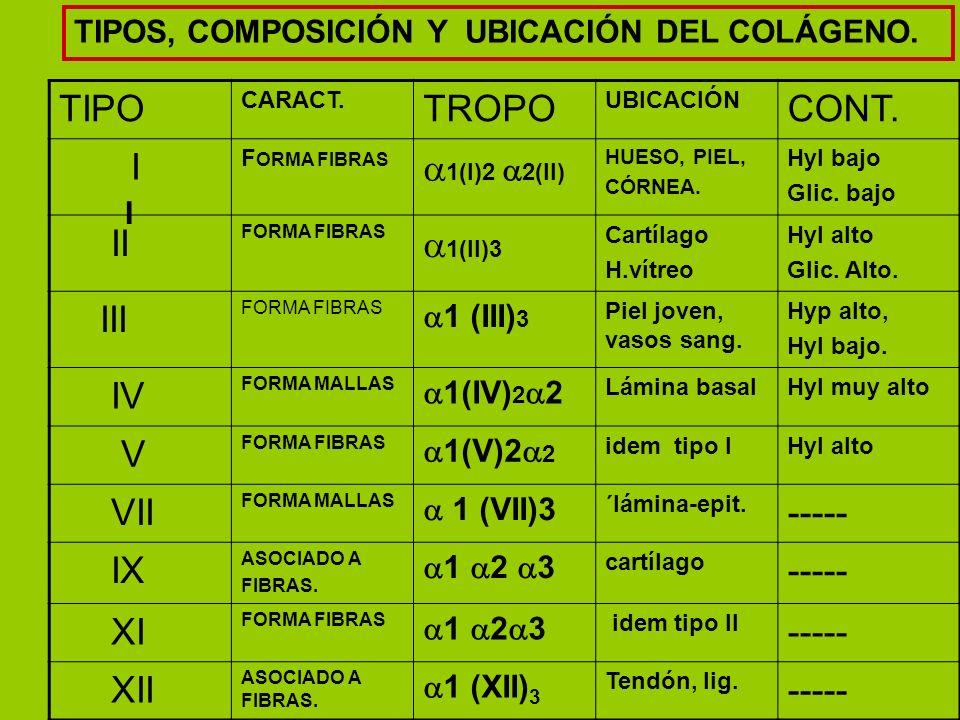 TIPO TROPO CONT. I 1(I)2 2(II) II 1(II)3 III IV V VII ----- IX XI