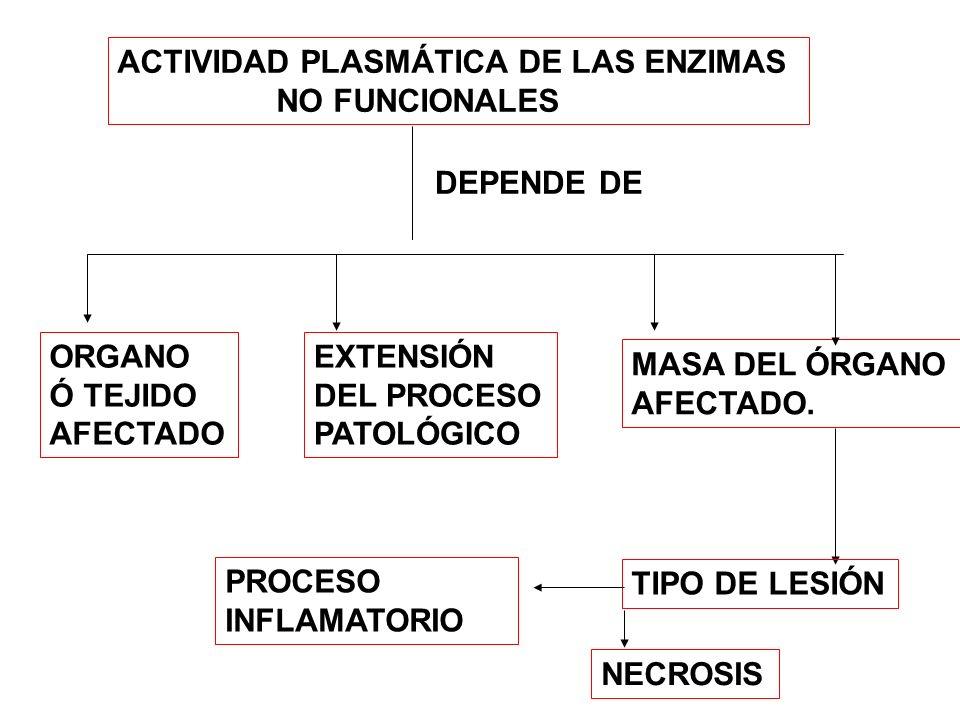 ACTIVIDAD PLASMÁTICA DE LAS ENZIMAS