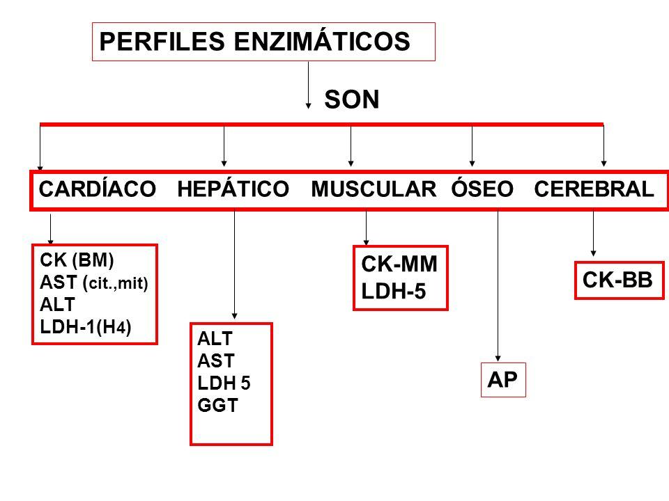 PERFILES ENZIMÁTICOS SON CARDÍACO HEPÁTICO MUSCULAR ÓSEO CEREBRAL