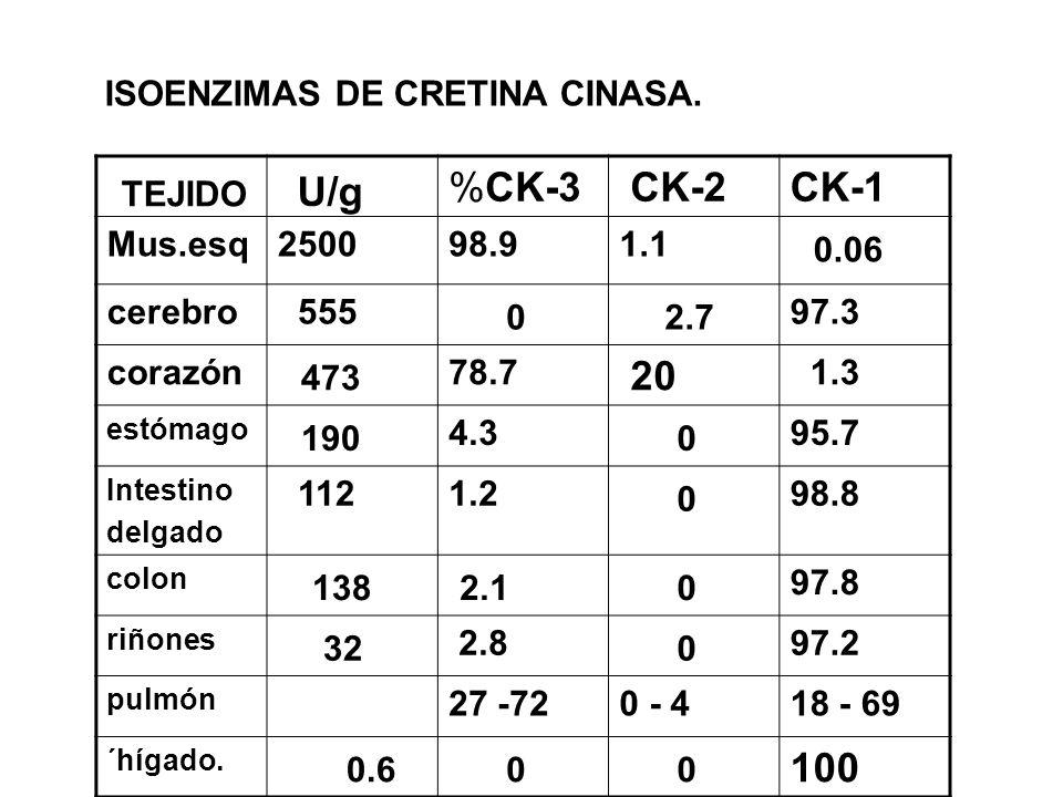 ISOENZIMAS DE CRETINA CINASA.