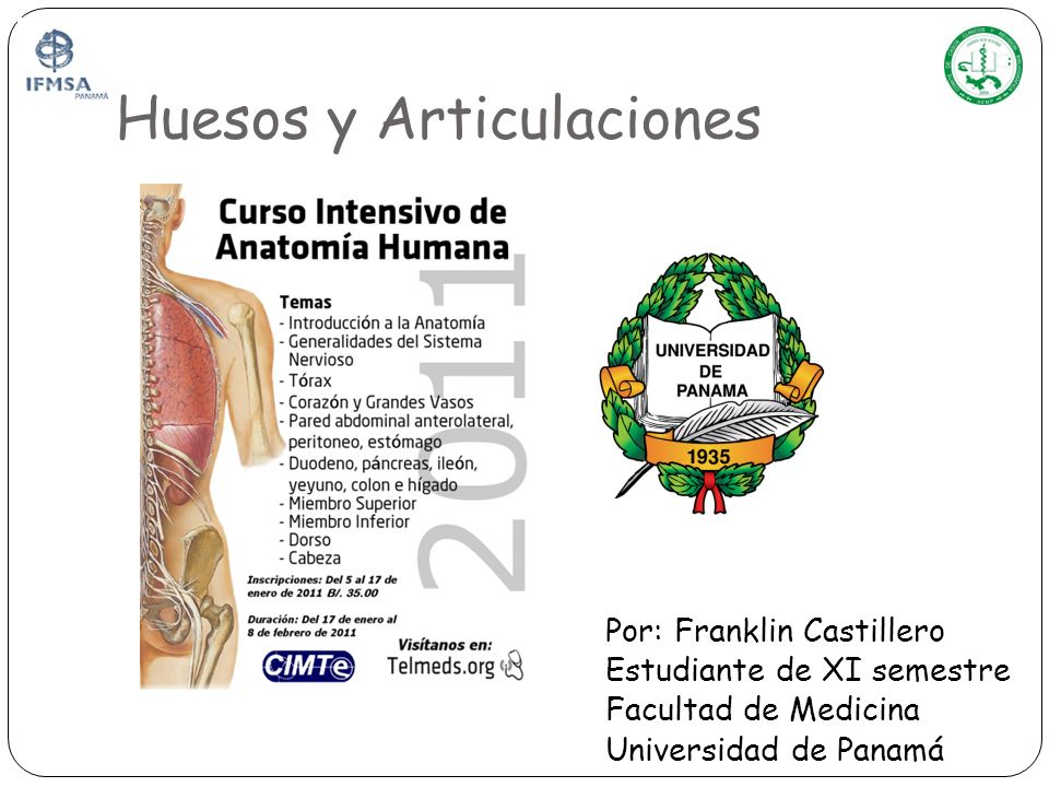 Huesos y Articulaciones - ppt video online descargar