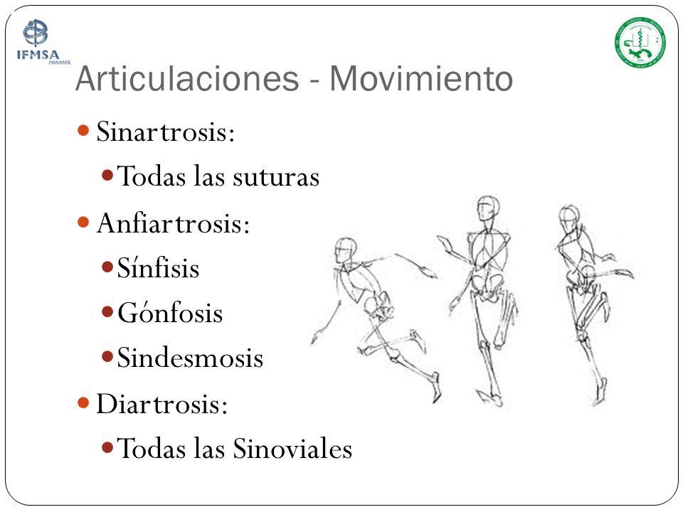 Articulaciones - Movimiento