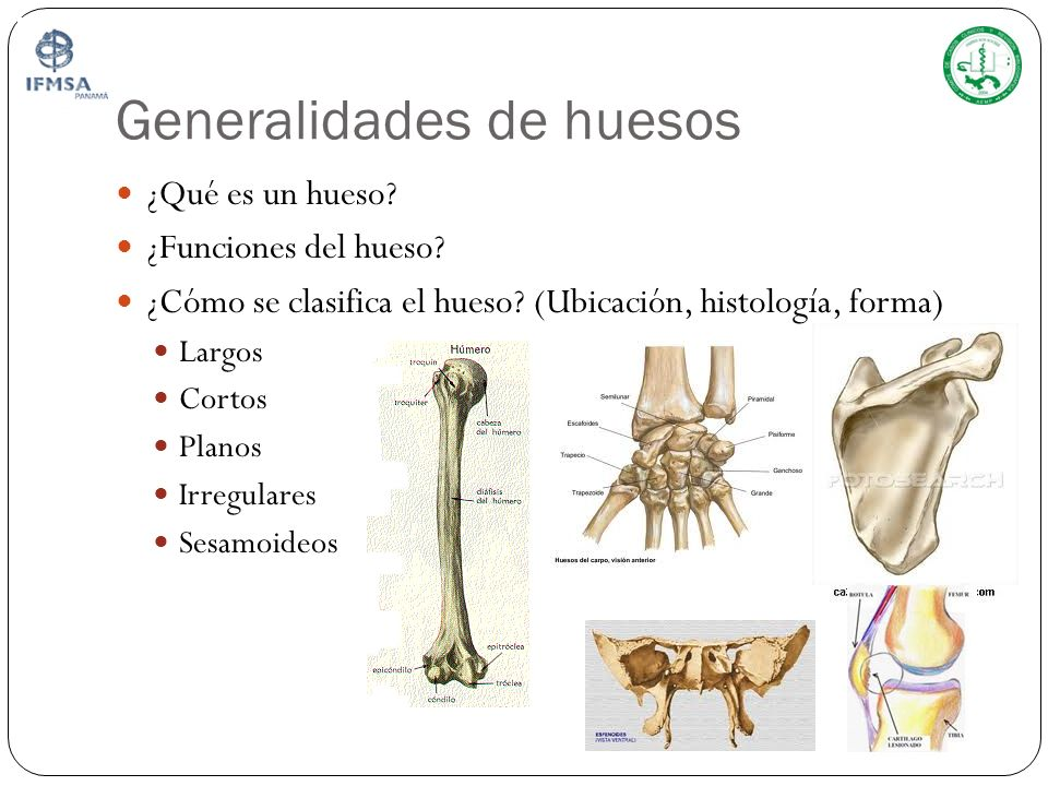 Generalidades de huesos