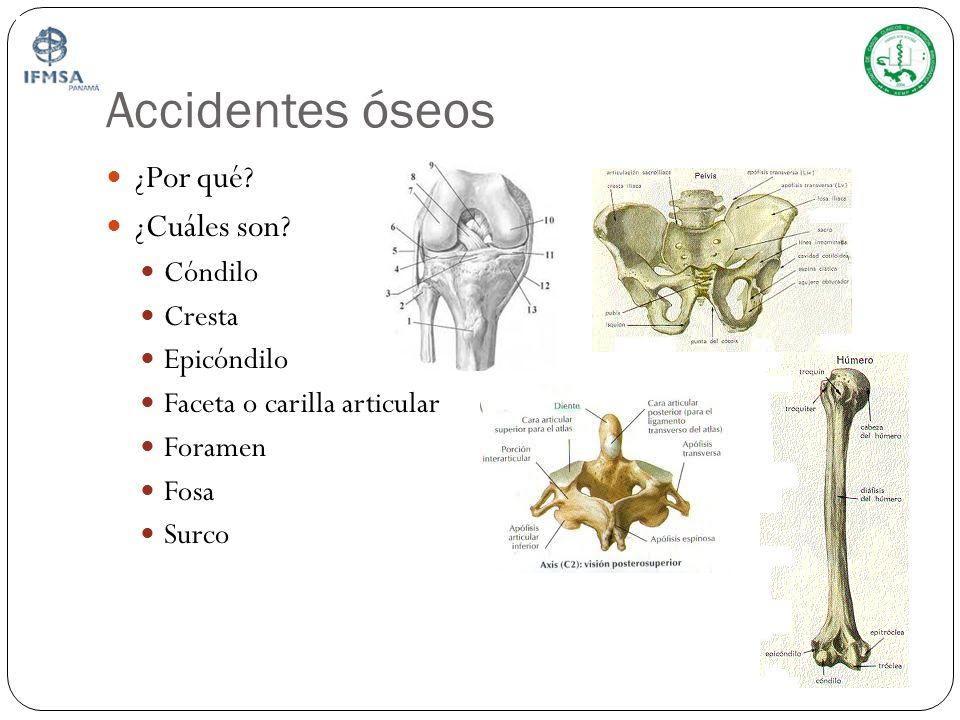 Accidentes óseos ¿Por qué ¿Cuáles son Cóndilo Cresta Epicóndilo