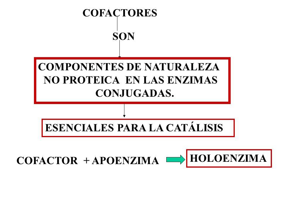 COFACTORESSON. COMPONENTES DE NATURALEZA. NO PROTEICA EN LAS ENZIMAS. CONJUGADAS. ESENCIALES PARA LA CATÁLISIS.