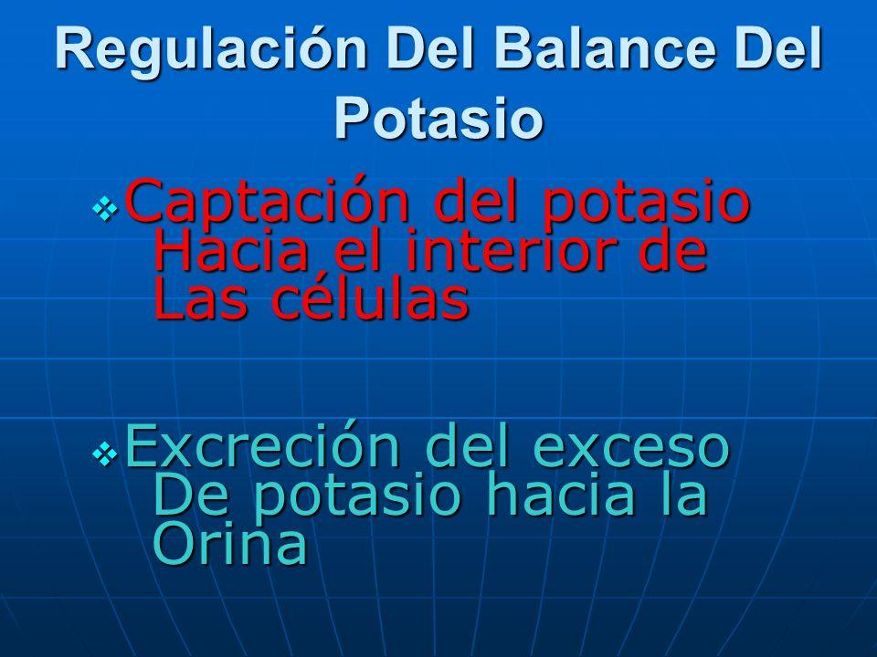 Regulación Del Balance Del Potasio