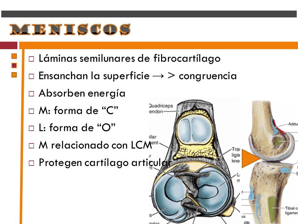 Láminas semilunares de fibrocartílago