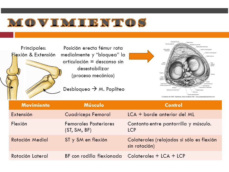 Principales:Flexión & Extensión. Posición erecta fémur rota medialmente y bloquea la articulación = descanso sin desestabilizar.