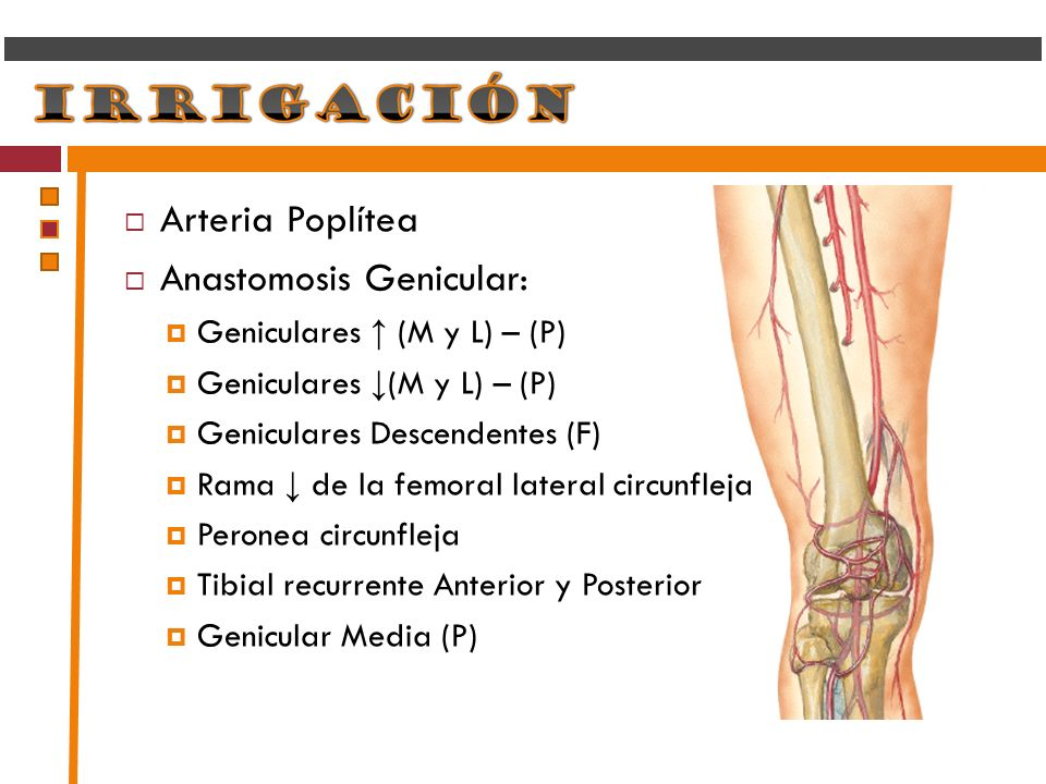 Anastomosis Genicular: