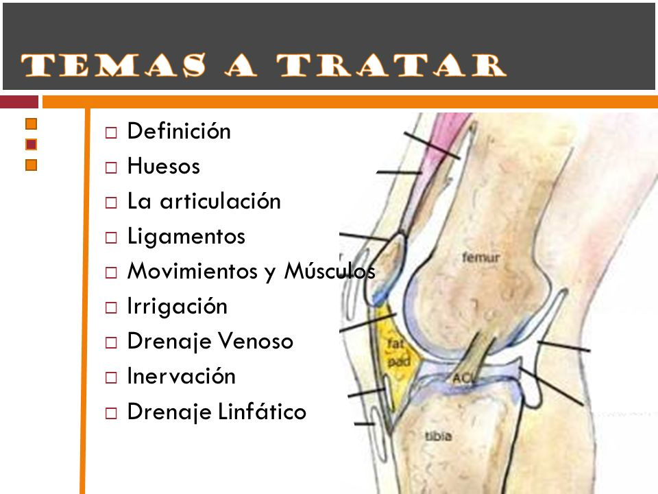 Definición Huesos. La articulación. Ligamentos. Movimientos y Músculos. Irrigación. Drenaje Venoso.