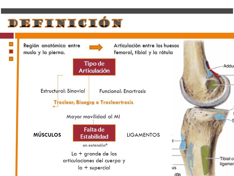 La + grande de las articulaciones del cuerpo y la + supercial