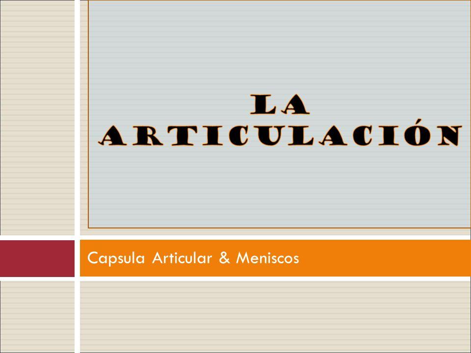 Capsula Articular & Meniscos