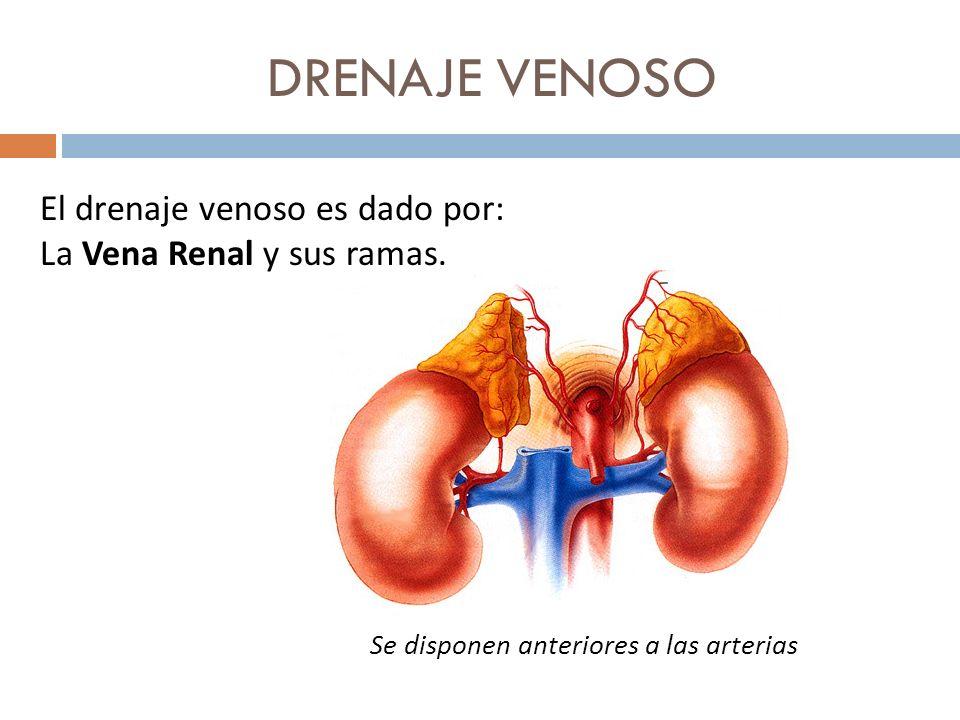 DRENAJE VENOSO El drenaje venoso es dado por: