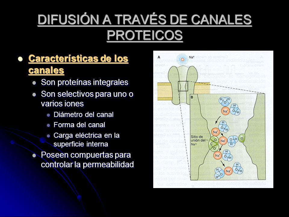 DIFUSIÓN A TRAVÉS DE CANALES PROTEICOS