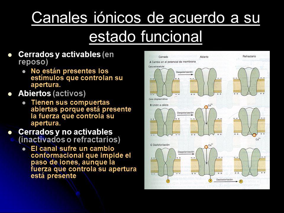 Canales iónicos de acuerdo a su estado funcional