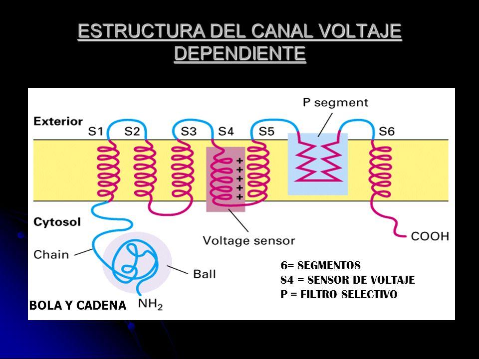 ESTRUCTURA DEL CANAL VOLTAJE DEPENDIENTE