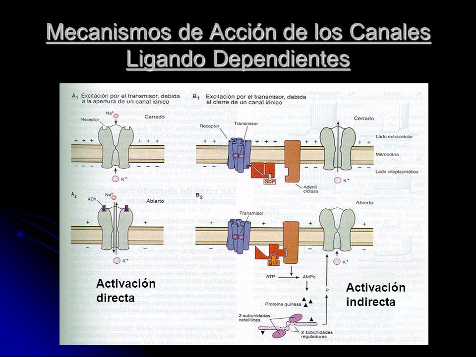 Mecanismos de Acción de los Canales Ligando Dependientes