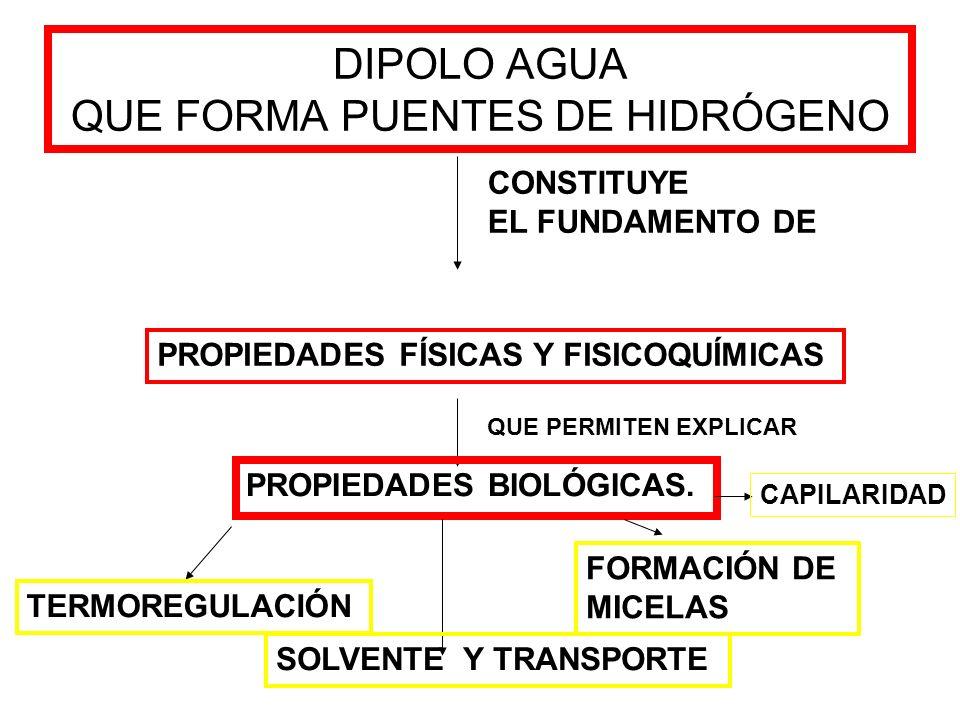 DIPOLO AGUA QUE FORMA PUENTES DE HIDRÓGENO