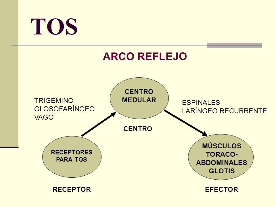 MÚSCULOS TORACO-ABDOMINALES GLOTIS