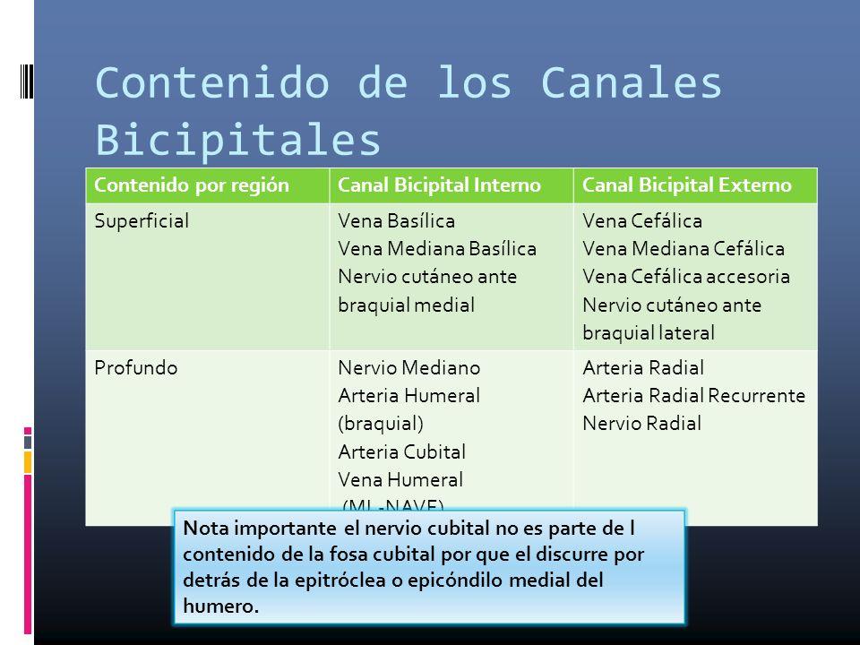 Contenido de los Canales Bicipitales