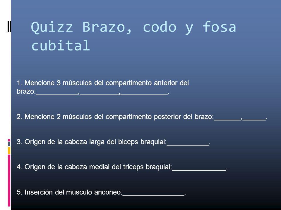 Quizz Brazo, codo y fosa cubital