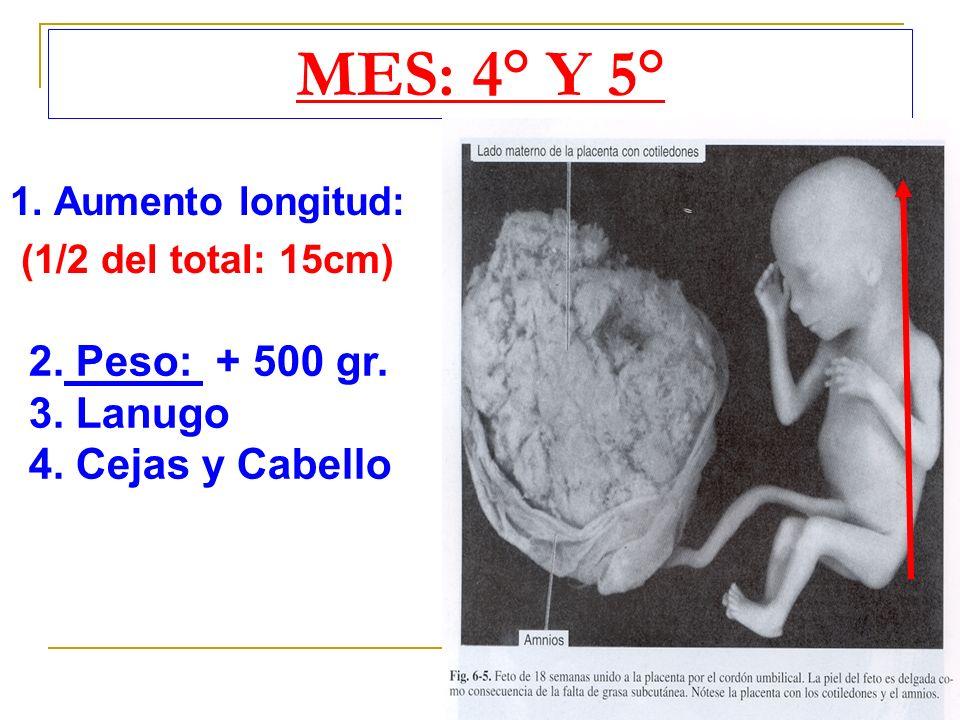 MES: 4° Y 5° 2. Peso: + 500 gr. 3. Lanugo 4. Cejas y Cabello