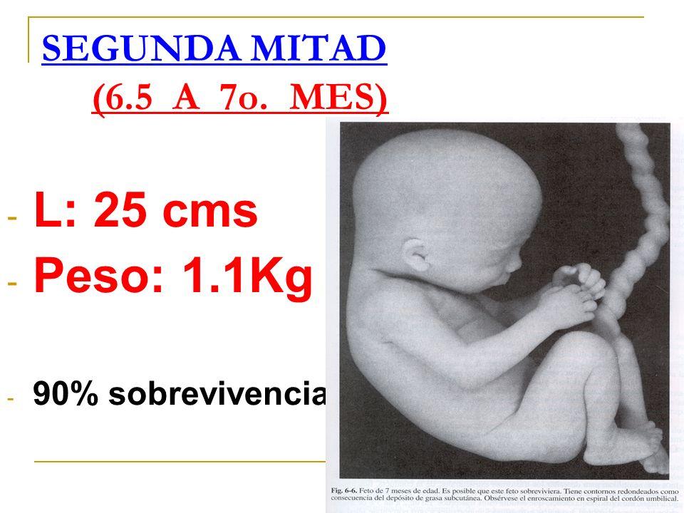 SEGUNDA MITAD (6.5 A 7o. MES) L: 25 cms Peso: 1.1Kg 90% sobrevivencia