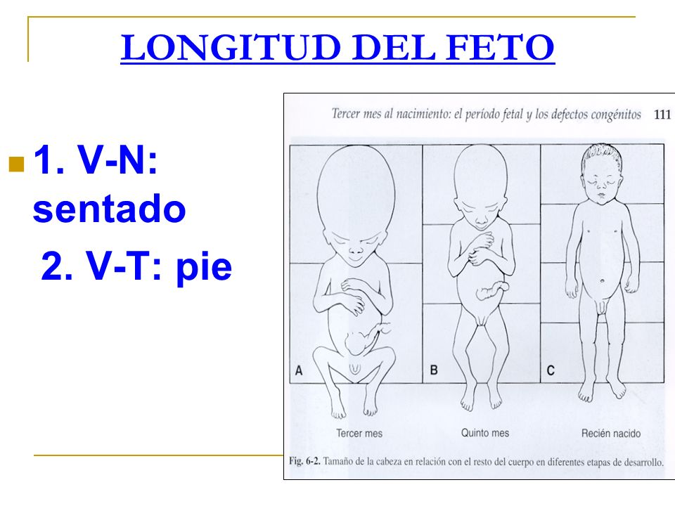 LONGITUD DEL FETO 1. V-N: sentado 2. V-T: pie