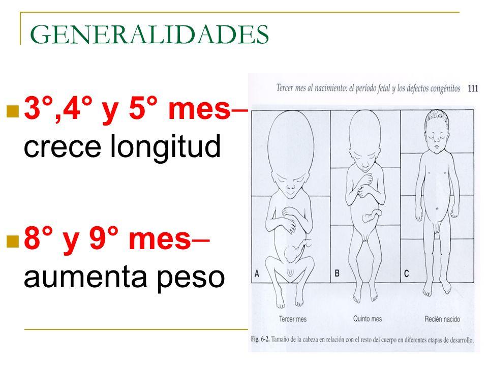 3°,4° y 5° mes– crece longitud