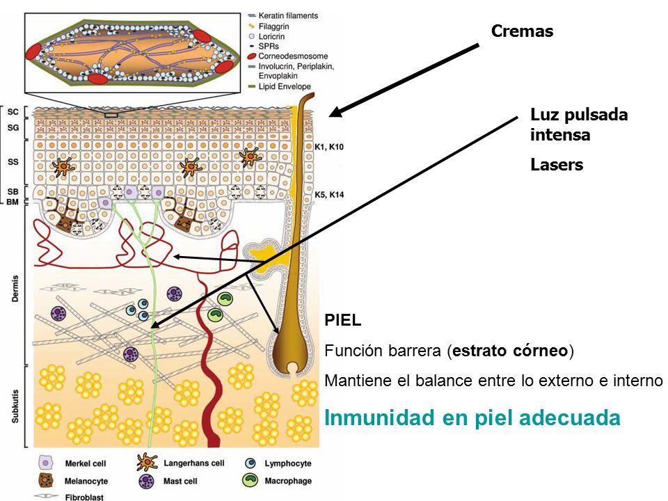 Inmunidad en piel adecuada