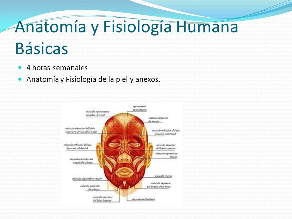 Anatomía y Fisiología Humana Básicas