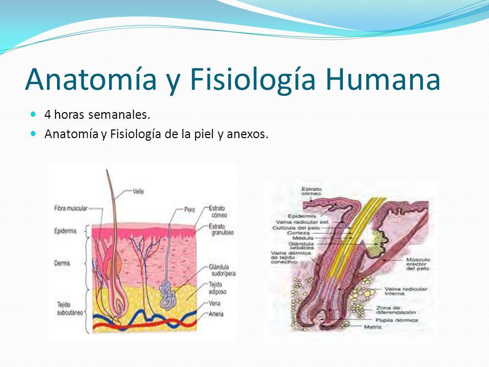 Famoso Anatomía De La Piel Y La Fisiología Pdf Viñeta - Anatomía de ...