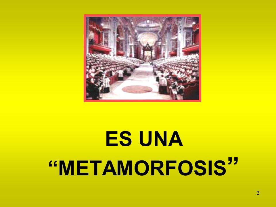 ES UNA METAMORFOSIS