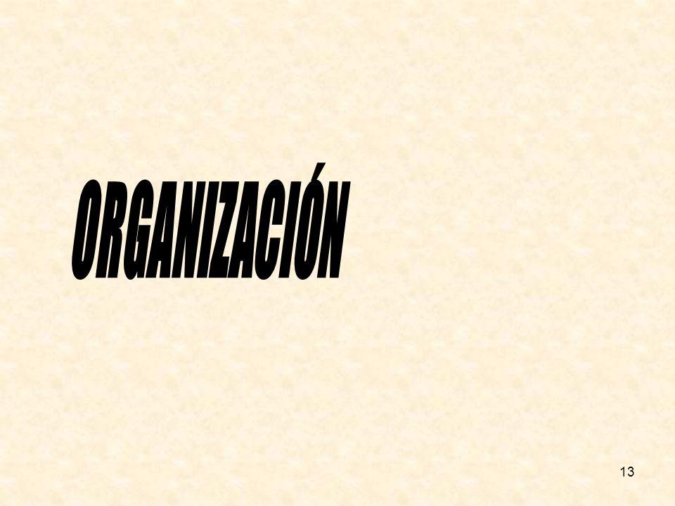ORGANIZACIÓN 13