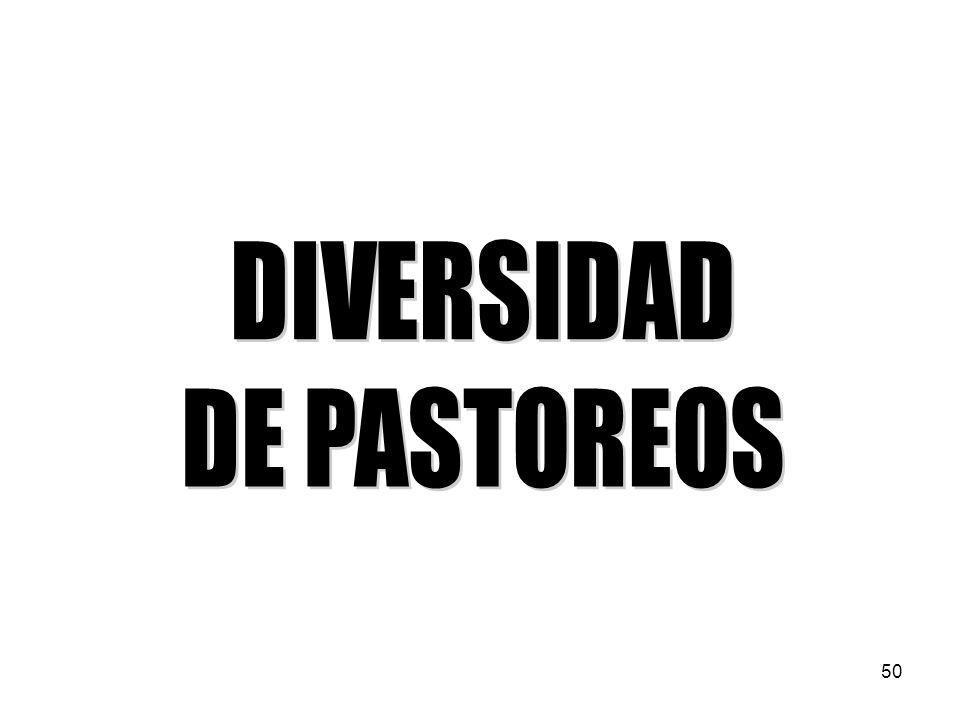 DIVERSIDAD DE PASTOREOS 50