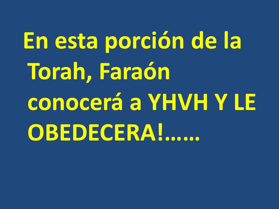 En esta porción de la Torah, Faraón conocerá a YHVH Y LE OBEDECERA!……
