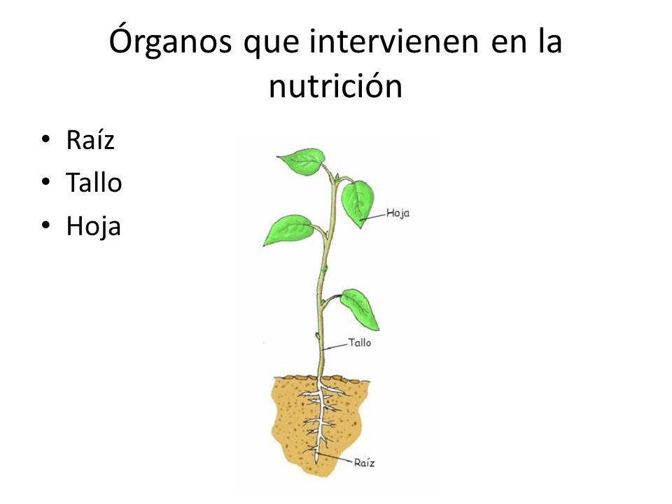 Órganos que intervienen en la nutrición