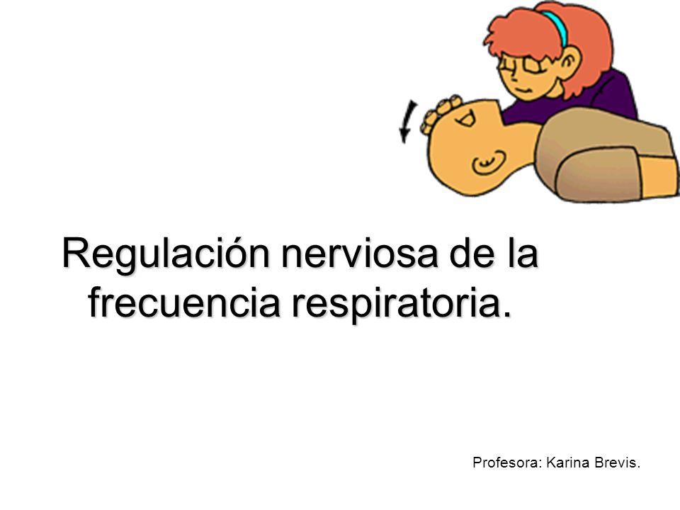 Regulación nerviosa de la frecuencia respiratoria.