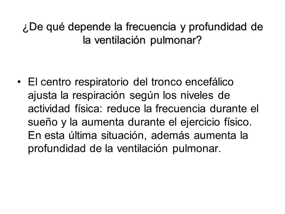 ¿De qué depende la frecuencia y profundidad de la ventilación pulmonar