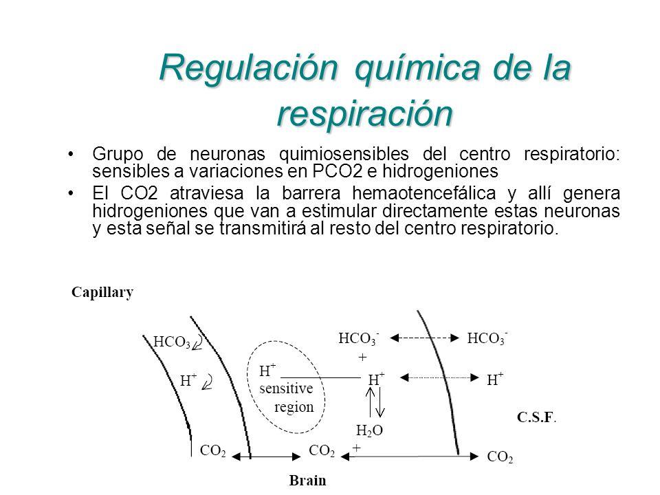 Regulación química de la respiración