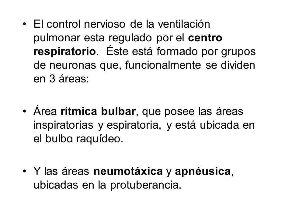 El control nervioso de la ventilación pulmonar esta regulado por el centro respiratorio. Éste está formado por grupos de neuronas que, funcionalmente se dividen en 3 áreas: