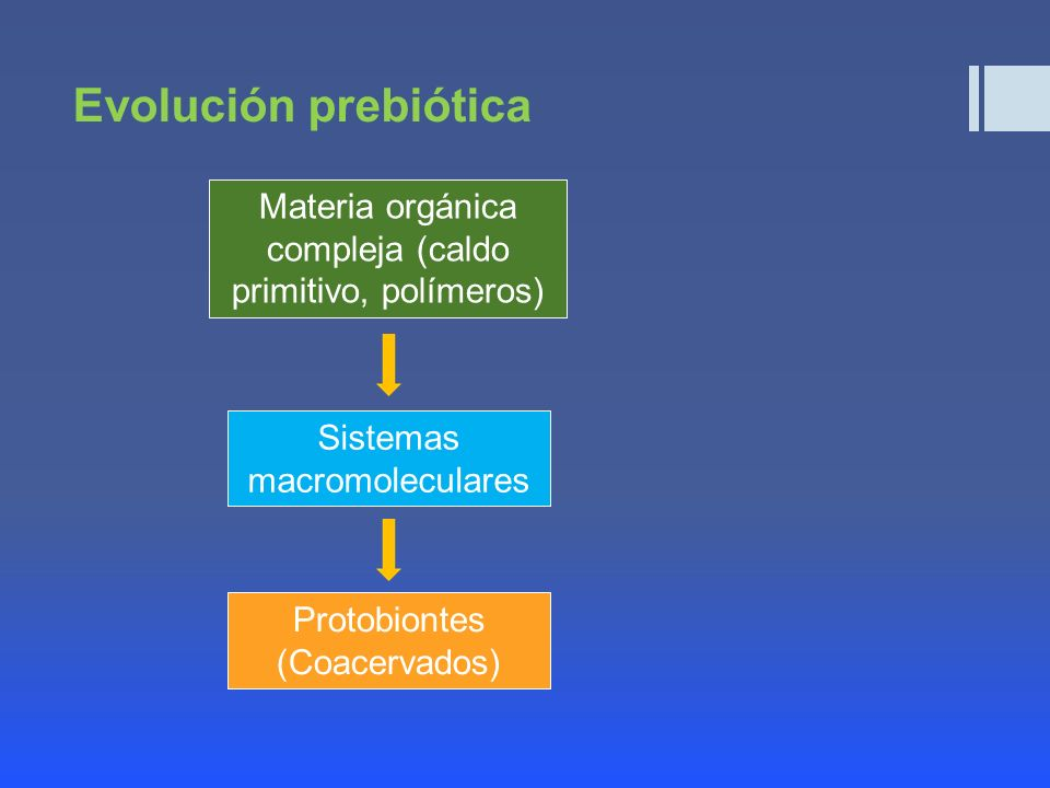 Evolución prebiótica Materia orgánica compleja (caldo primitivo, polímeros) Sistemas macromoleculares.