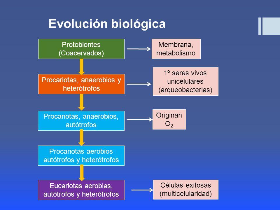 Evolución biológica Protobiontes (Coacervados) Membrana, metabolismo
