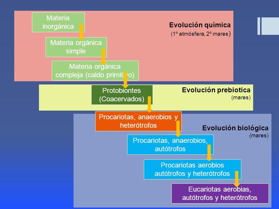 Materia orgánica compleja (caldo primitivo)