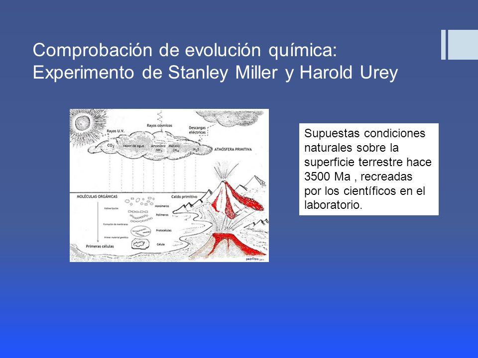 Comprobación de evolución química: Experimento de Stanley Miller y Harold Urey