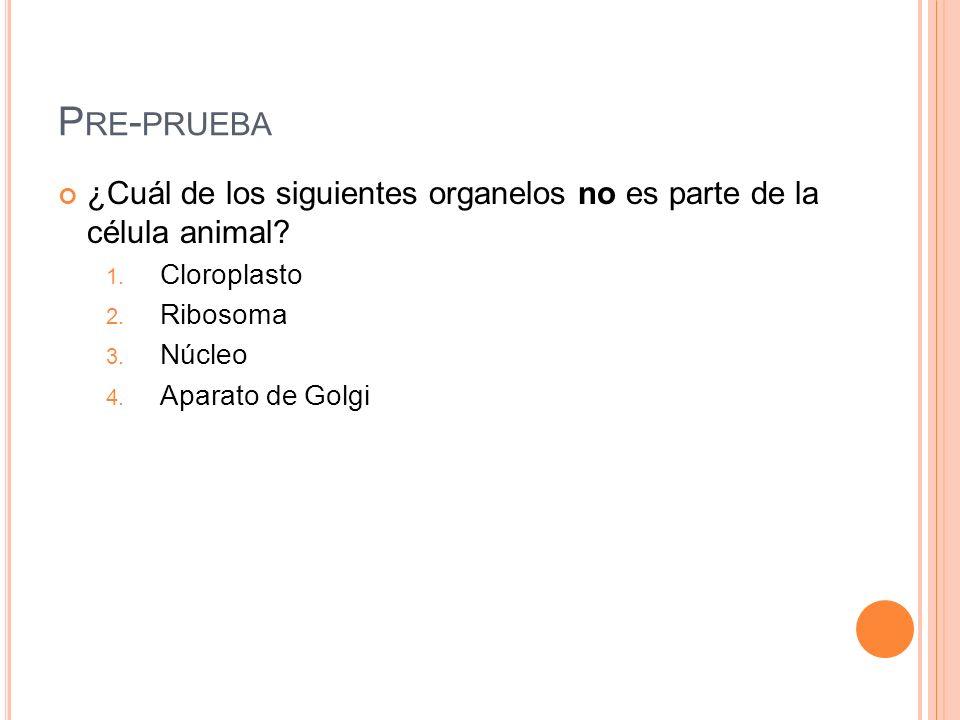 Pre-prueba ¿Cuál de los siguientes organelos no es parte de la célula animal Cloroplasto. Ribosoma.