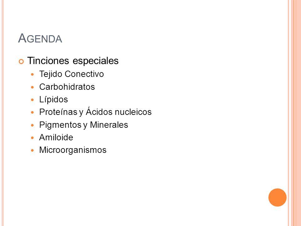 Agenda Tinciones especiales Tejido Conectivo Carbohidratos Lípidos